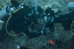 BD-150423-Maldives-7824-Homo-sapiens.-Linnaeus.-1758-[Diver].jpg